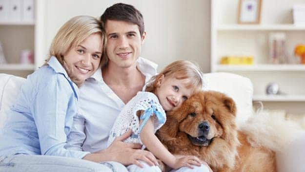 Wills & Trusts dog-young-family Direct Wills Kilburn